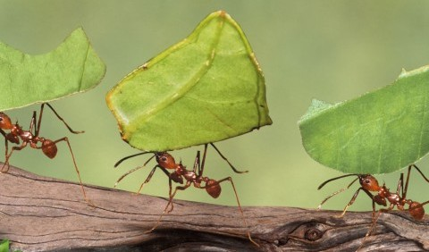 Цікаві факти про комах
