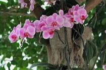 Орхідеї – ті, що дарують радість