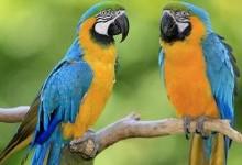 Папугоподібні – ряд птахів (Psittaciformes)