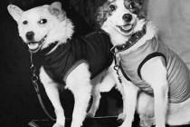 Собаки Білка і Стрілка відправилися на орбіту Землі