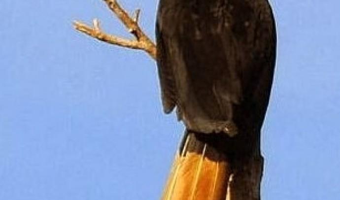 Птахи-носороги – родина птахів (Bucerotidae)
