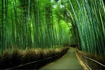 Трава заввишки сорок метрів