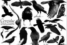 Воронові – родина птахів (Corvidae)