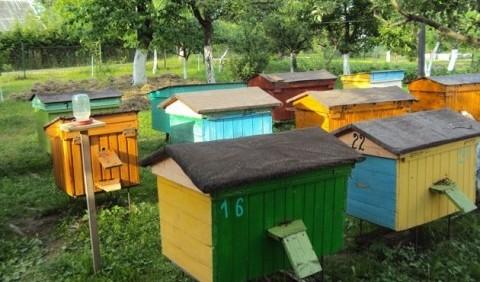 Бджільництво