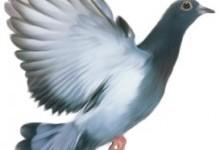 Голуб у світогляді українців