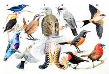 Горобцеподібні – ряд птахів (Passeriformes)