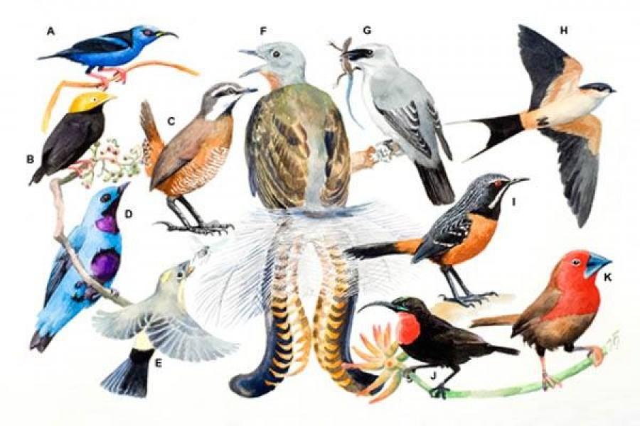 ☰ Горобцеподібні – ряд птахів (Passeriformes) ➦ Тварини ⇒ ВЕЕ
