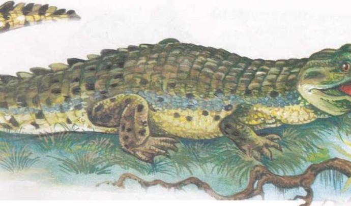 Гребінчастий крокодил