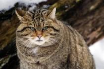 Скільки котів на землі?