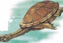 Змійошия черепаха