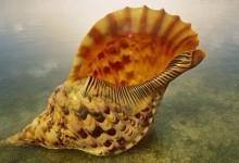 Чому ми чуємо шум моря в морській раковині?