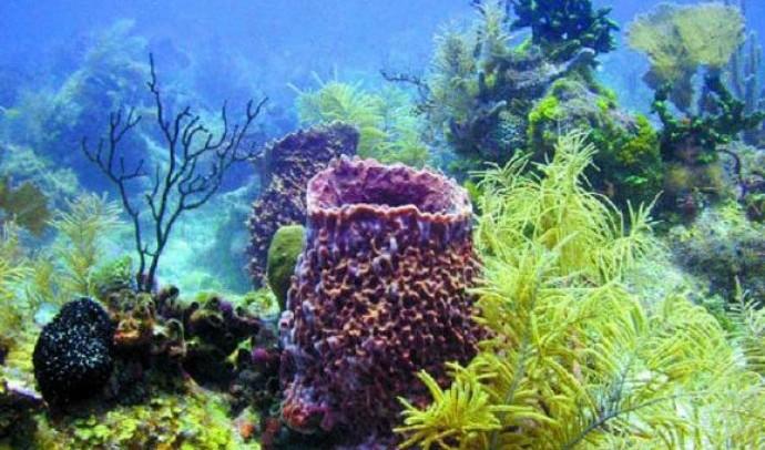 Морські губки