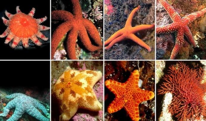 Незвичайні морські мешканці