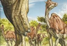 Переваги й недоліки життя в стаді динозаврів