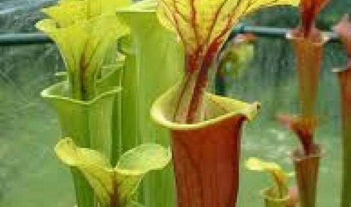 Рослини-мисливці