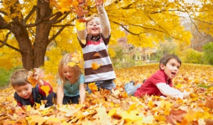 Чому восени листя жовтіє та опадає навіть там, де не буває снігу?