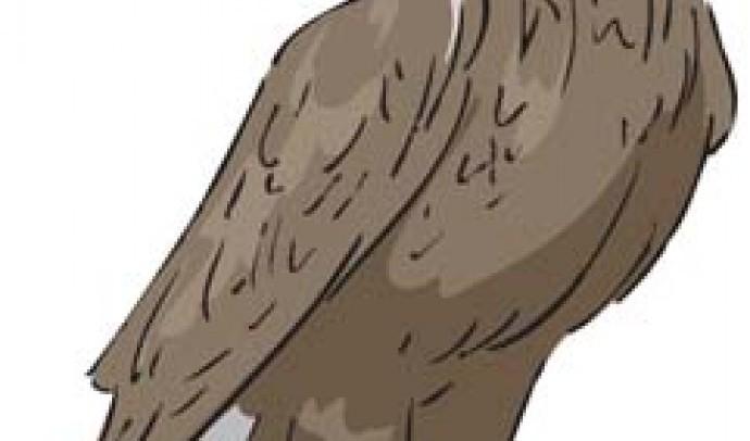 Орел у світогляді українців