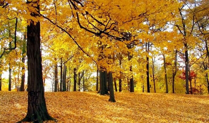 Чому восени листя жовтіє?