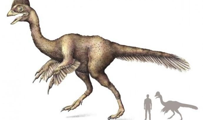 Пернаті динозаври провінції Лайонінг (Китай)