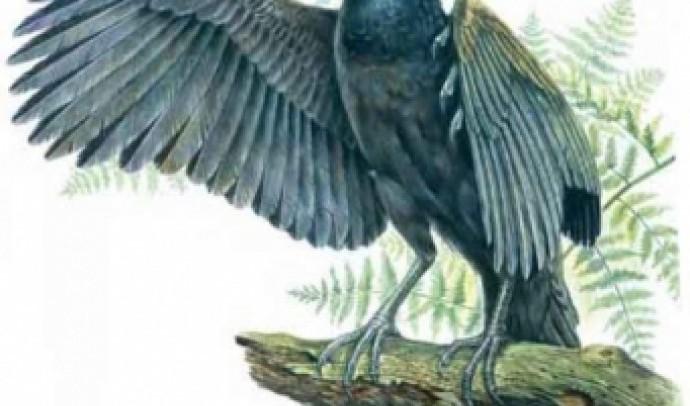 Перші птахи