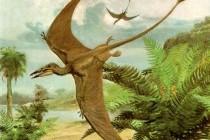 Птерозавр (загальний огляд)