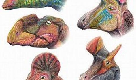 Орнітоподи