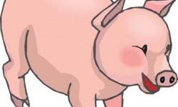 Свиня у світогляді українців