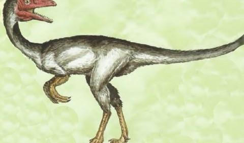 Синозавроптерикс