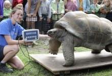 Вік і розміри черепах