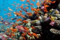 Різнобарвні моря